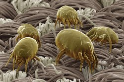 Cheap Mattress Dust Mites Cleaning Melbourne - Zero Spot Cleaning