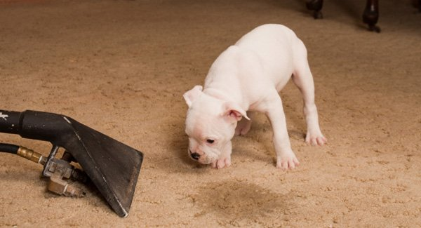 Cheap Pet Stain and Odour Removal and Cleaning Cleaners Melbourne - Zero Spot Cleaners